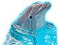 Dolphin-2 Cardboard Cutout Standup Prop